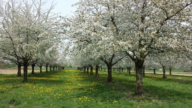 Весна в Баден-Вюртемберге