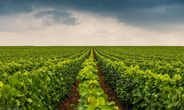 Виноградные долины в окрестностях Реймса