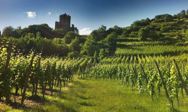 Руины средневекового замка в Кайзерберге