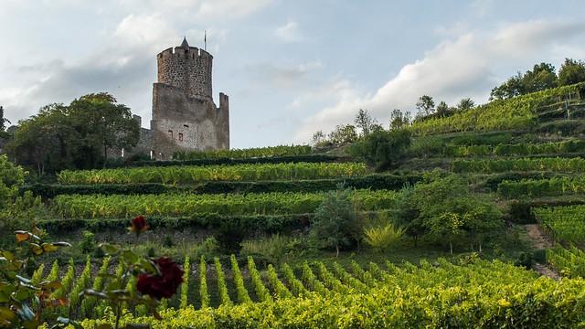Виноградники в окрестностях Кайзерсберга